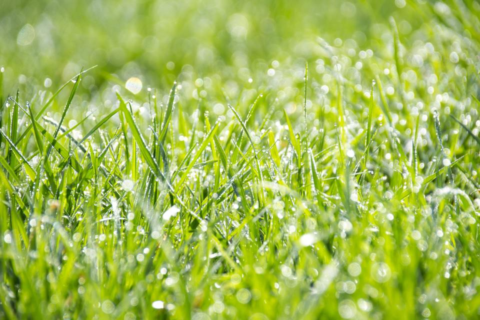 nature, grass, ground, wet, rain, water, droplets, bokeh, green