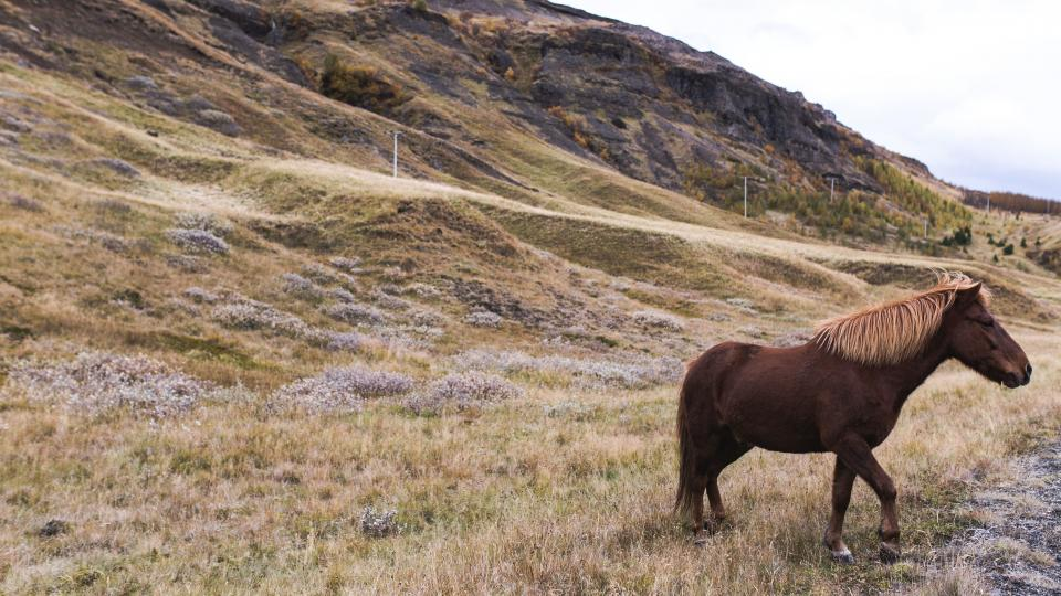 highland, grassland, grass, landscape, nature, horse, animal