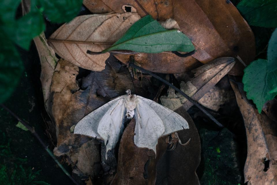 leaf, fall, butterfly, insect, animal, outdoor