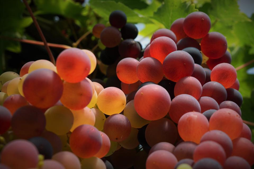 ブドウフルーツ食品健康デザートファームフィールド