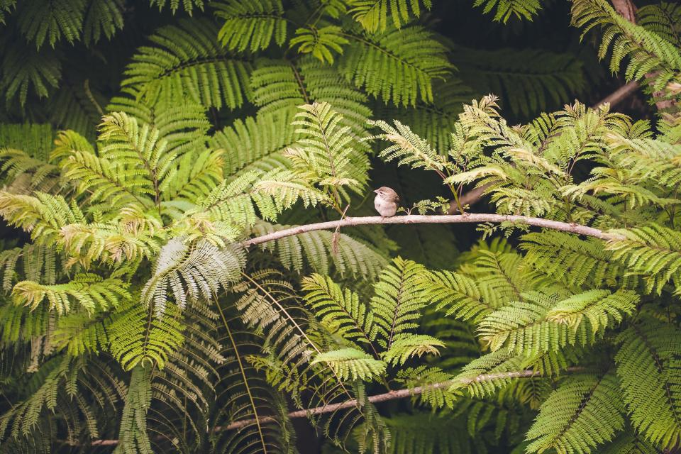 bird, animal, branch, tree, green, plant, nature, forest