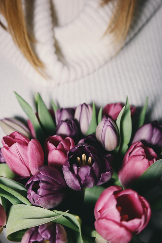 flower, pink, violet, petal, bloom, garden, plant, nature, autumn, fall, green, leaves