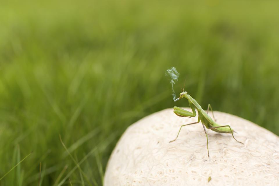 grasshopper, insect, grass, field
