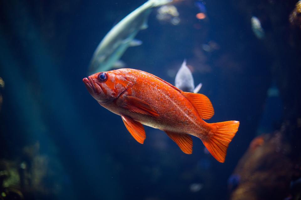 orange fish aquatic animal nature pet corals