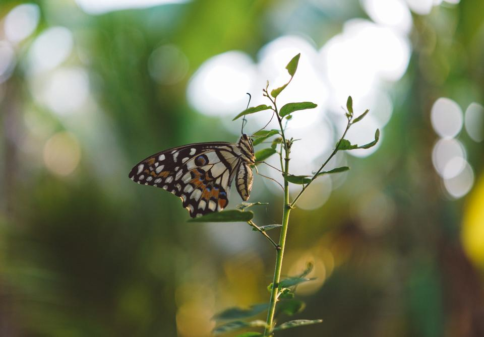 butterfly, insect, green, leaf, plant, nature, blur, bokeh
