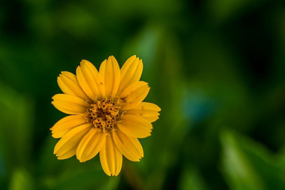 plants, flower, sunflower, bokeh, blur, decor, display, garden, yellow, green, bloom, outdoor, leaves, petals