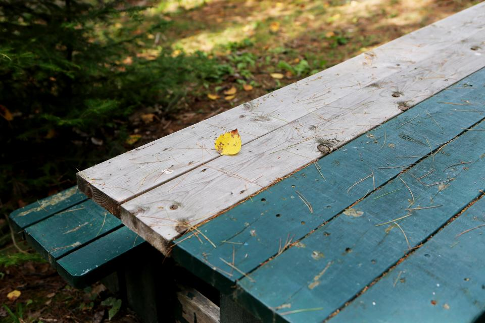 picnic table, wood, outdoors, nature