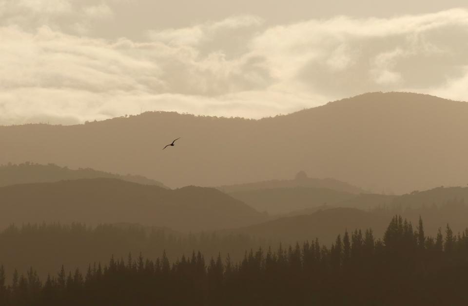nature, landscape, mountain, clouds, sky, bird, brown, woods, forest, climb, trek, travel, adventure
