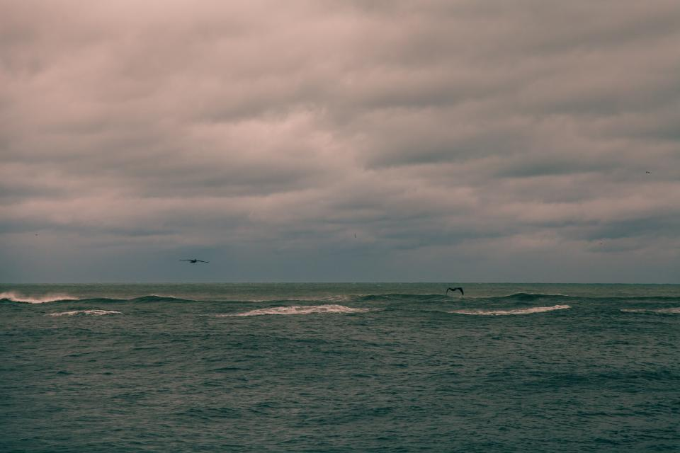 sea, ocean, water, waves, horizon, sky, cloudy, nature, bird, animal, flying