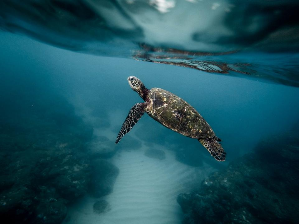 sea, turtle, ocean, blue, water, rocks
