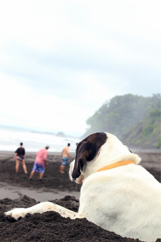 dog, pet, animal, beach, people