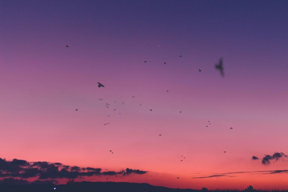 sunset, sky, cloud, birds, flying, animal