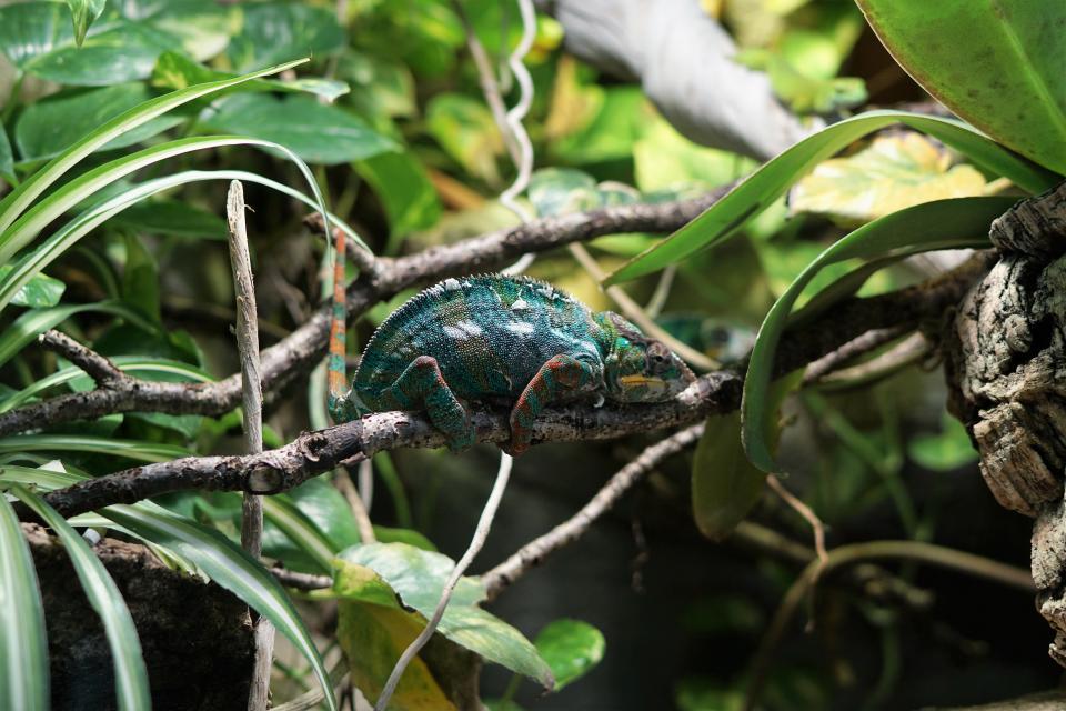 green, leaf, plant, nature, branch, lizard, reptile