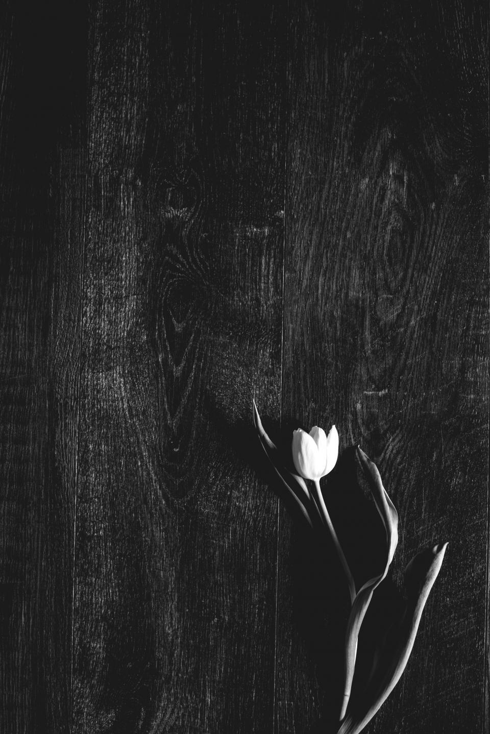 flower, white, petal, bloom, garden, plant, nature, autumn, fall, table, black and white, monochrome