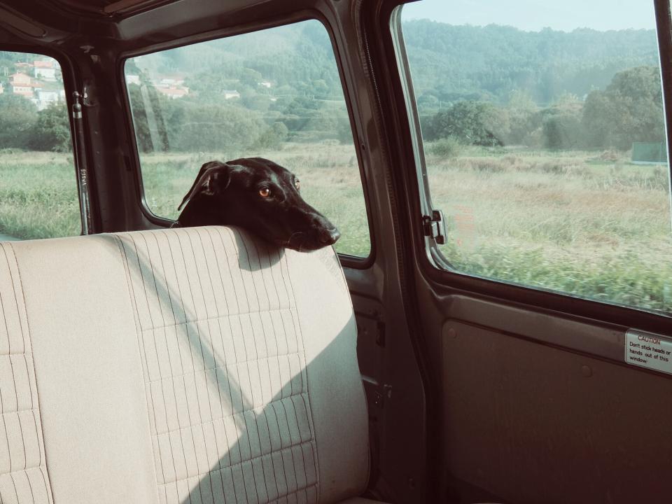 dog, pet, animals, car, van, windows, nature, landscape, rural, countryside