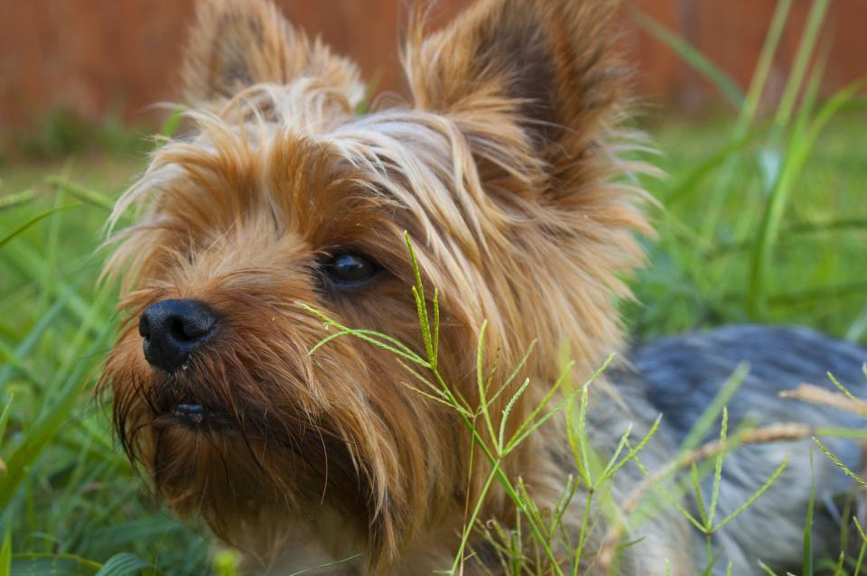 nature, grass, animals, dogs, cute, pet
