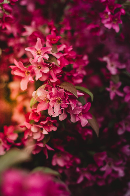 pink, flower, bloom, petal, leaves, plant, nature, green, blur