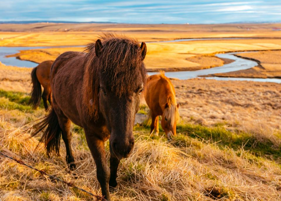green, grass, outdoor, horse, animal, nature, river, water, view
