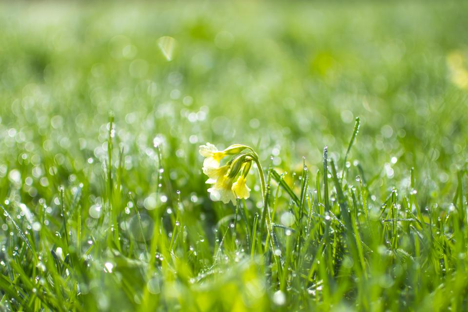 flowers, nature, blossoms, grasslands, field, grass, white, wet, ground, water, droplets, rain
