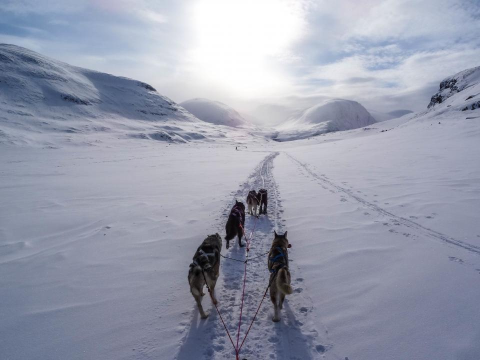highland, mountain, path, snow, winter, clouds, sky, sunlight, husky, dog, pet, animal