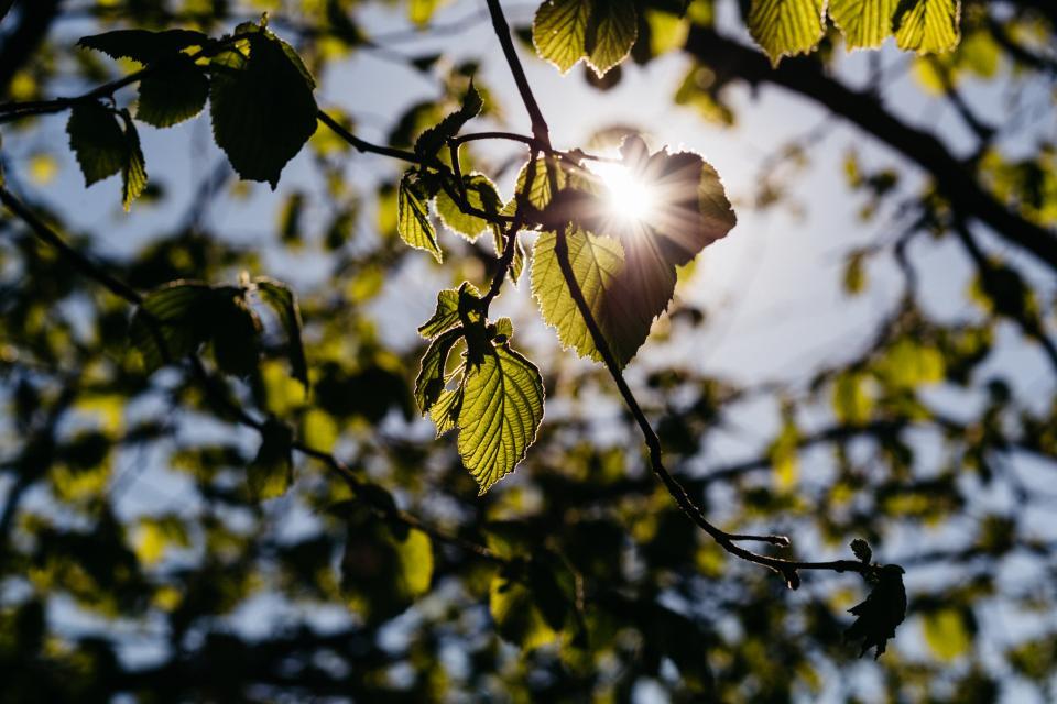 green leaf tree plant nature sky sunrise sunshine sunlight