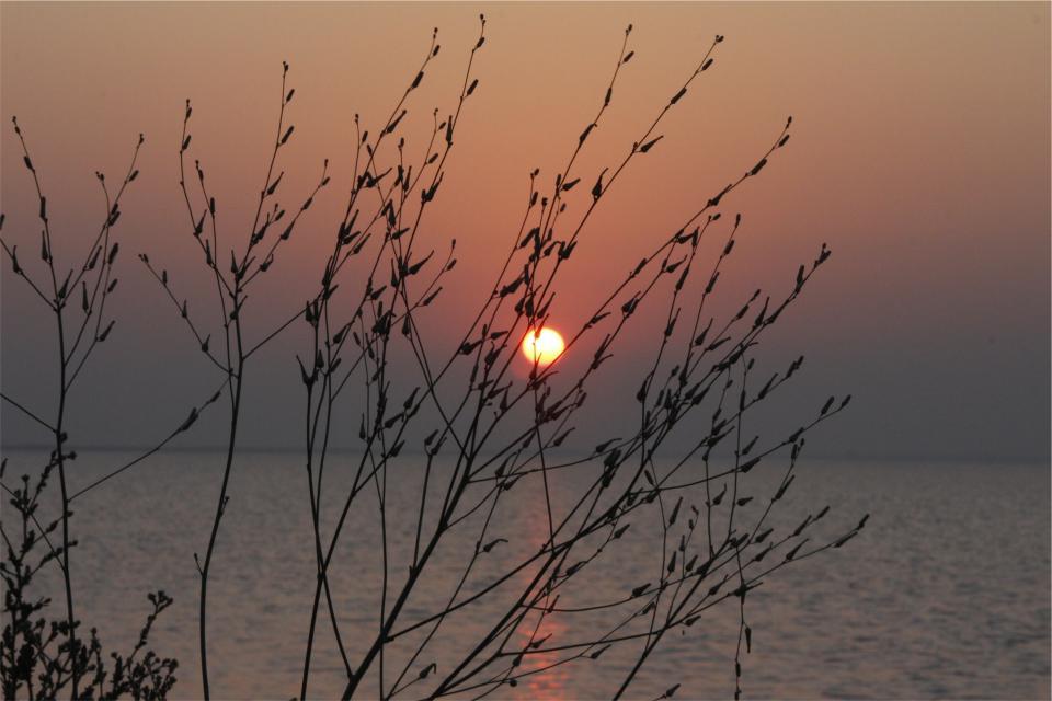 sunset dusk sky water horizon lake water plants