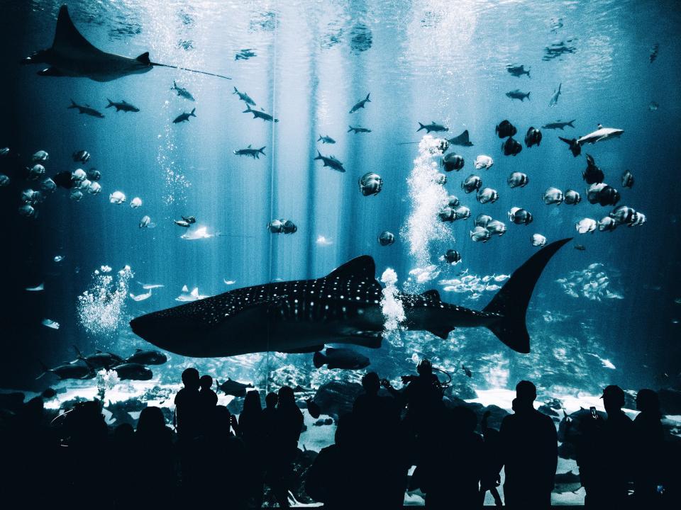 fish, aquatic, animal, aquarium, underwater, blue, water, whale, people, crowd, silhouette