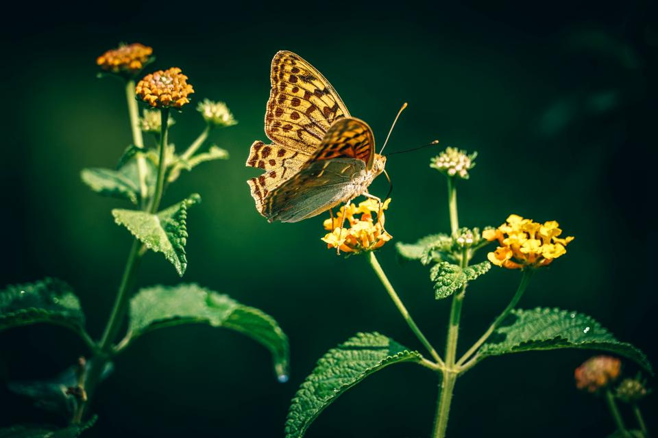 flower, butterfly, insect, green, leaf, nature, dark, light