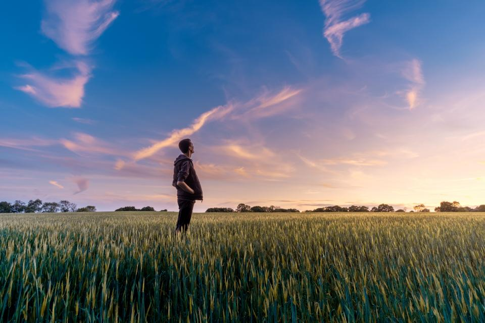 green field crops agriculture farm nature yard trees plant outdoor cloud sky people man alone