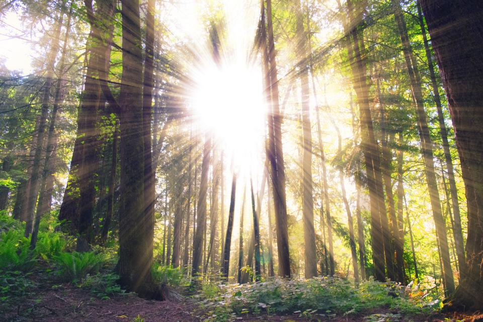 sun rays sunlight trees forest woods nature