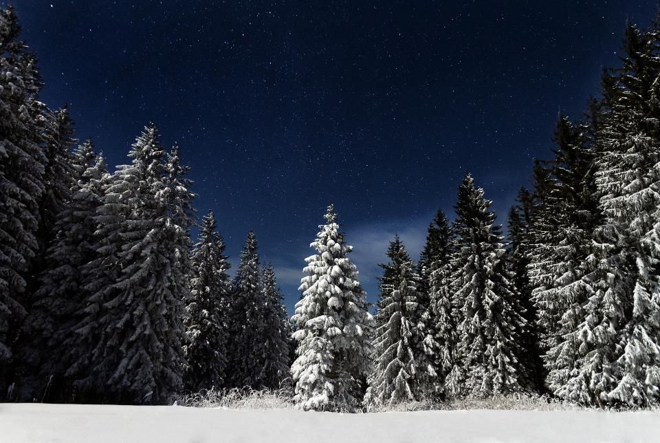 nature, landscape, woods, forest, snow, winter, cold, weather, dark, night, stars, stargazing, travel, adventure
