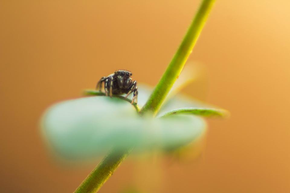 nature, stem, green, closeup, macro, animals, insect, bug