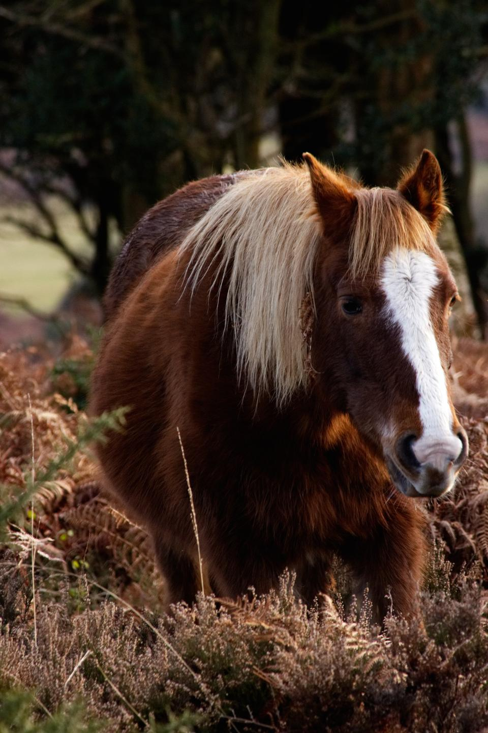 horse, animal, brown, grassland, plant, trees, woods, snout