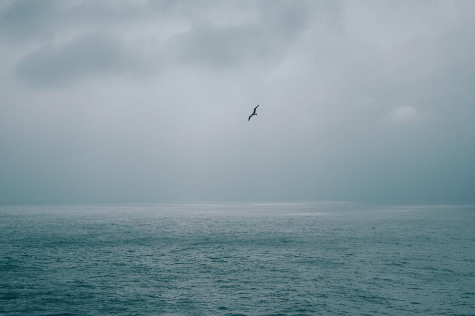 sea, ocean, water, bird, flying, animal, clouds, sky, nature