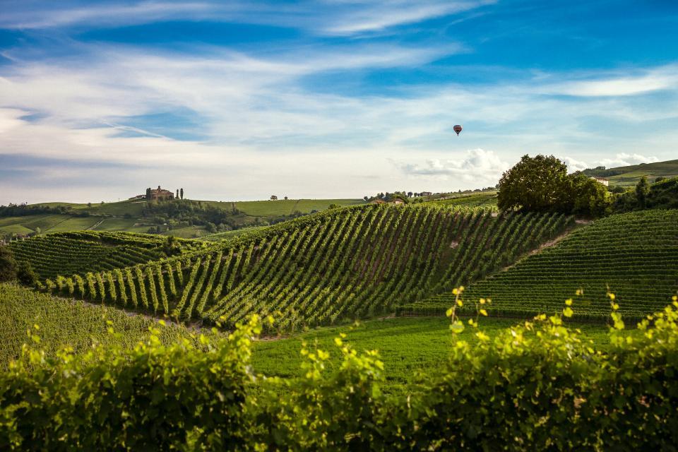 nature landscape plains grass plots crops harvest farm plants trees sky clouds hot air balloon picturesque