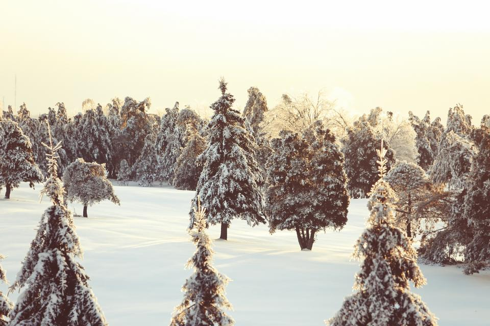 winter, snow, trees, cold, canada, quebec, nature, outdoors