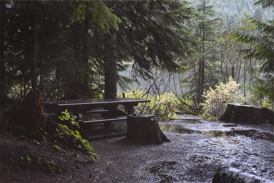 picnic table, raining, wet, trees, mud, dirt, nature, puddles