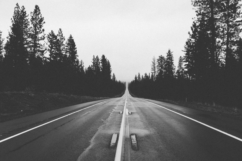 road, trees, black and white
