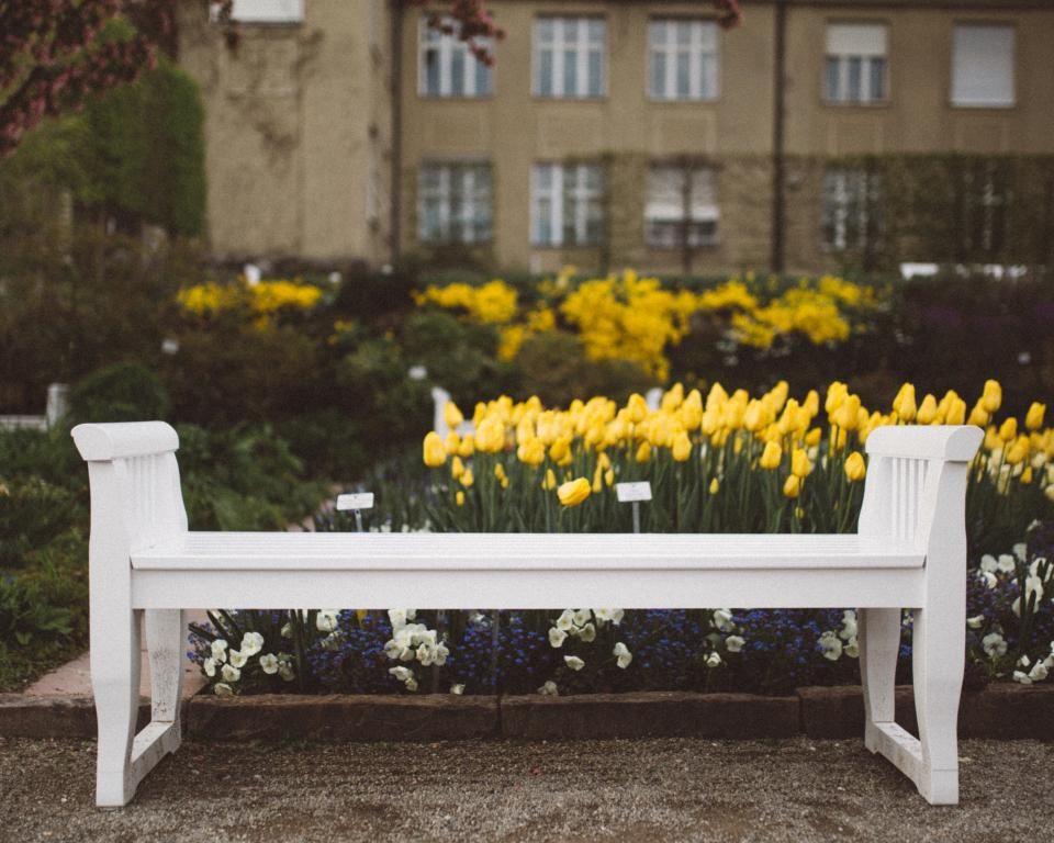 yellow, flower, tulips, garden, outdoor, nature, plants, white, bench
