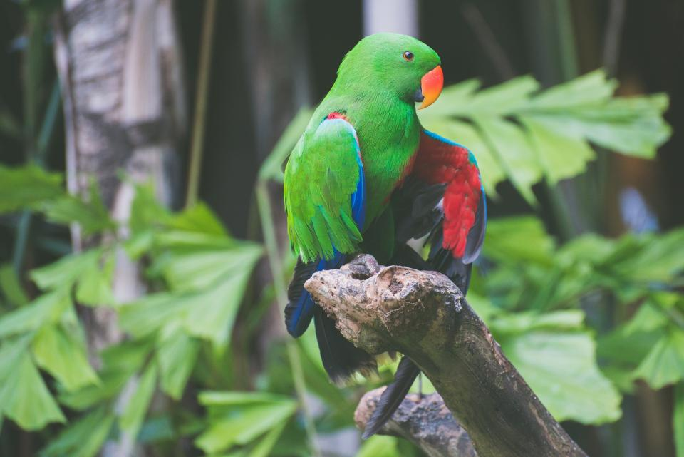 bird, animal, parrot, branch, trees, plants, green, leaves, beak, colorful, garden
