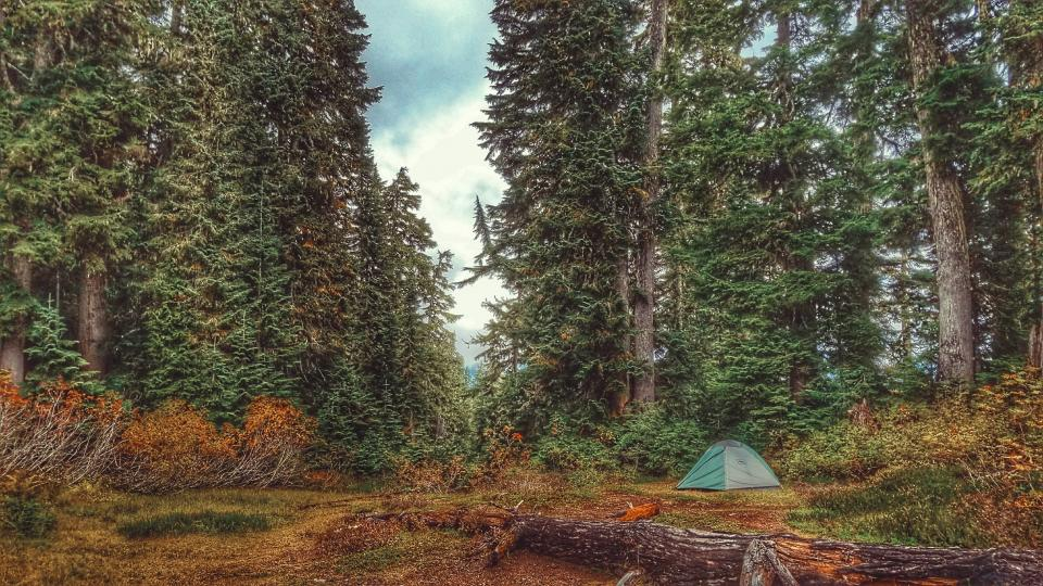 trees, woods, plants, nature, forest, outdoor, adventure, camping, tent, hiking, sky, fall