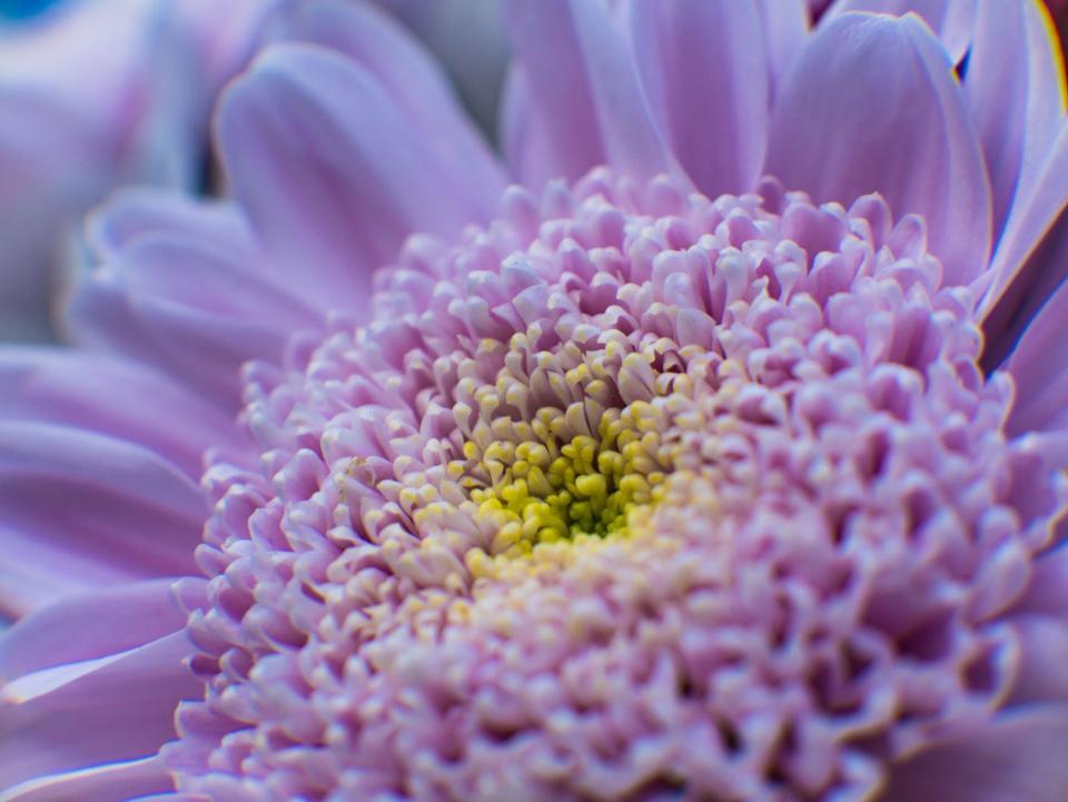 purple flower bloom petals blur