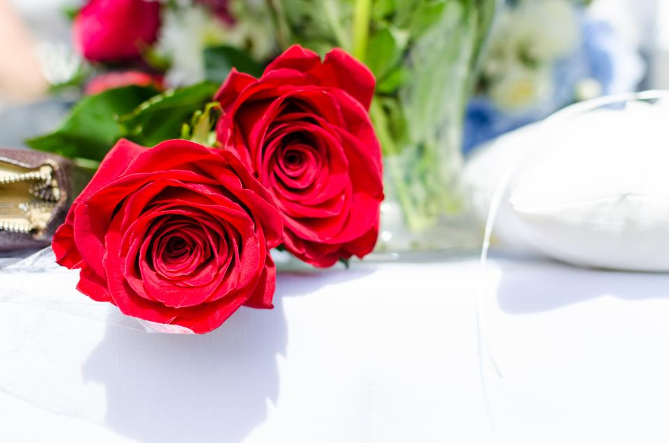 rose, petals, red, bloom, garden, field, flowers, leaves