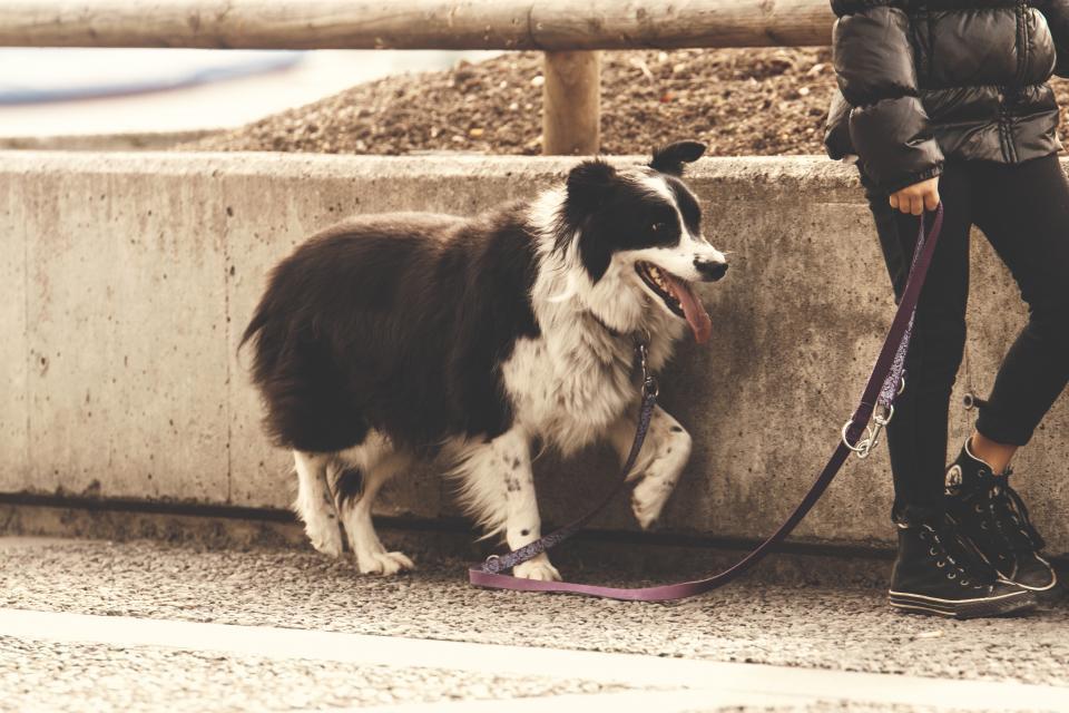 black, dog, animal, pet, leash, people, girl, black, shoes, pants, wall, street
