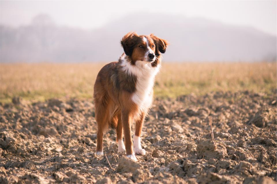 dog, pet, animal, hair, dirt