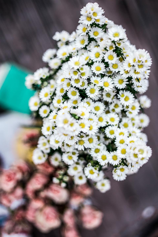 white, petal, flower, bloom, bouquet, bunch, blur, bokeh