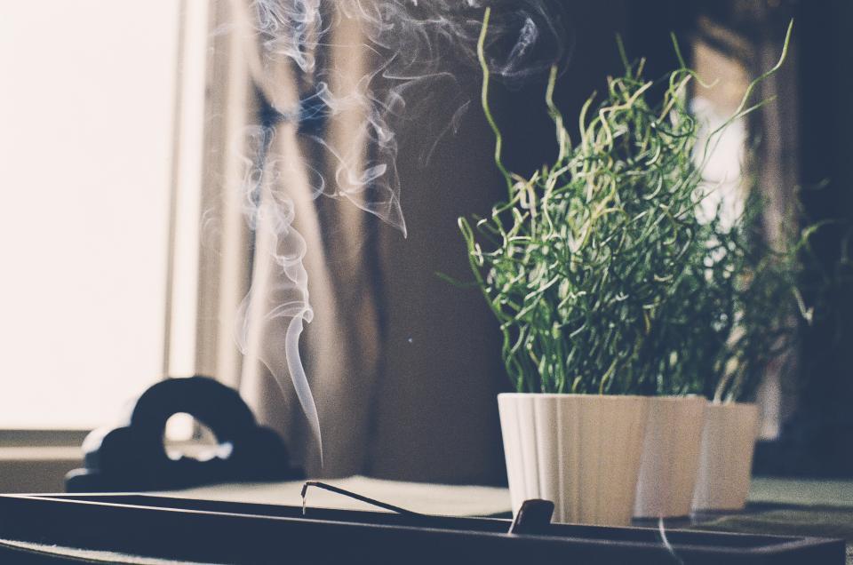 sch nste zimmerpflanzen mit 5 einfachen pflege tipps. Black Bedroom Furniture Sets. Home Design Ideas