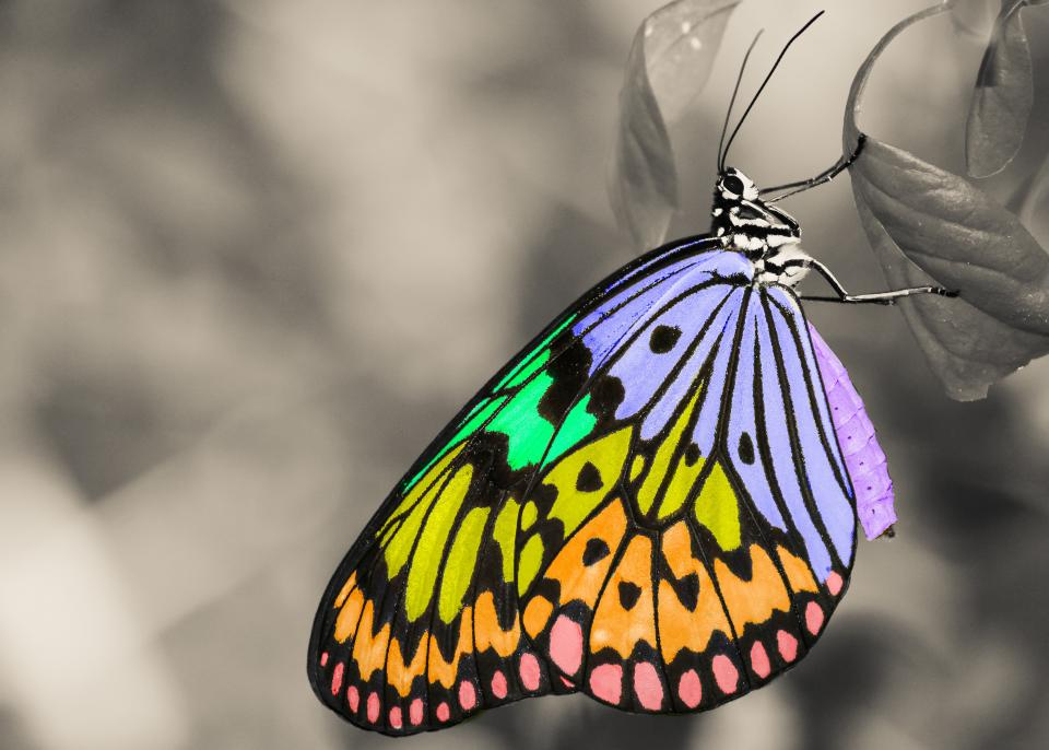 colorful, insect, butterfly, animal, wings, leaf, black and white, nature, bokeh, blur