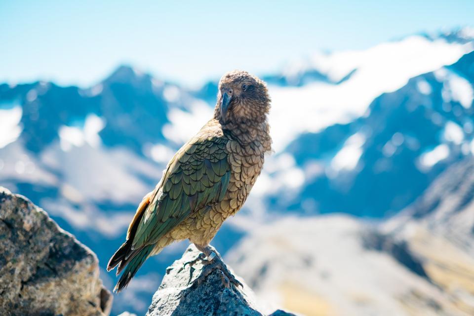 bird beak feather animal fly nature landscape mountain travel adventure