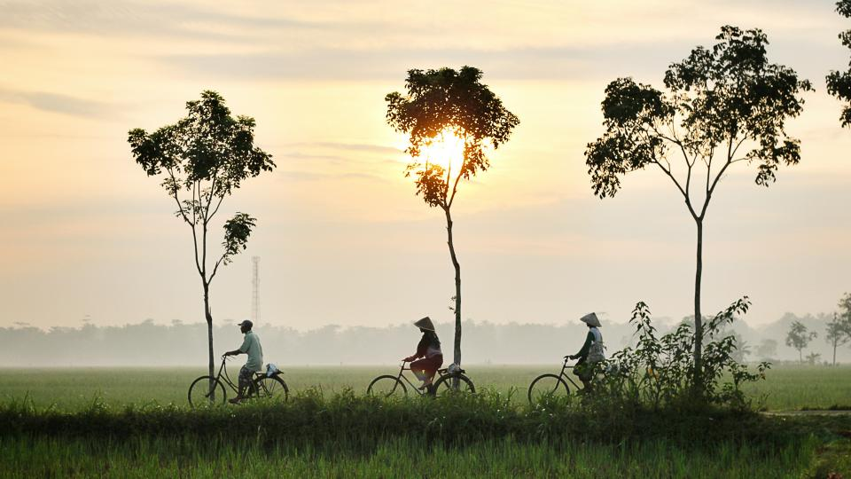 nature, landscape, trees, grass, green, field, sunset, people, bike, bicycle, exercise